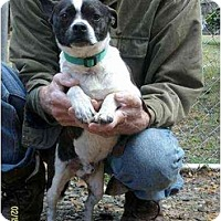 Adopt A Pet :: Satch(aka Sox) - Lincolndale, NY