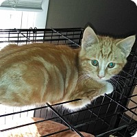 Adopt A Pet :: Clove - East Brunswick, NJ