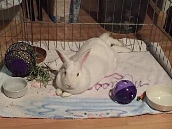 New Zealand Mix for adoption in Los Angeles, California - Bun Bun