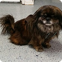 Adopt A Pet :: Ginny West - Urbana, OH