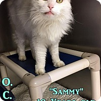 Adopt A Pet :: T-5 Sammy - Triadelphia, WV