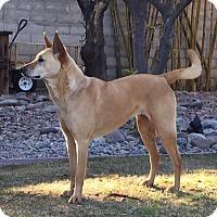 Adopt A Pet :: Sam (fostered in California) - Cranston, RI