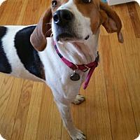 Adopt A Pet :: Damaris - Livonia, MI