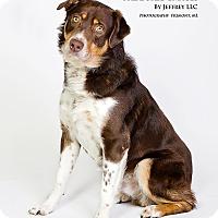 Adopt A Pet :: Riley Joe - Fremont, MI