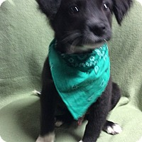 Adopt A Pet :: Kevin - Rochester, NY