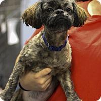 Adopt A Pet :: Logan - Jupiter, FL