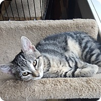 Adopt A Pet :: Little Debbie - Berkeley Hts, NJ
