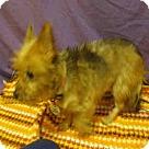 Adopt A Pet :: *SELENA