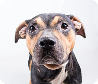 Terrier (Unknown Type, Small) Mix Dog for adoption in Decatur, Georgia - Krystal