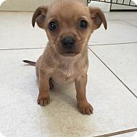 Adopt A Pet :: Happy - Lima, PA