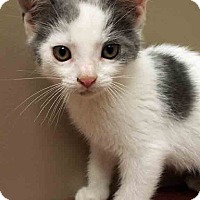 Adopt A Pet :: Ridley - Shorewood, IL
