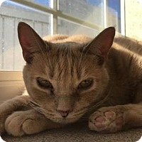 Adopt A Pet :: Teegan - Janesville, WI