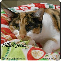 Adopt A Pet :: Billie Jean - Gonic, NH