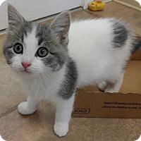 Adopt A Pet :: Frankie - Cloquet, MN