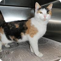 Adopt A Pet :: Calla - North Wilkesboro, NC