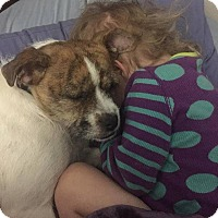 Border Terrier/Jack Russell Terrier Mix Dog for adoption in Normal, Illinois - Tia
