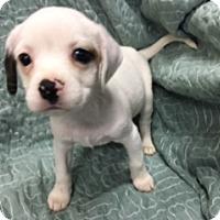 Adopt A Pet :: MAGNUM - Elk Grove, CA