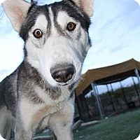 Adopt A Pet :: Leia - Alamogordo, NM