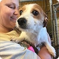 Adopt A Pet :: Jay - Mexia, TX