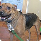 Adopt A Pet :: Weaver-LOVES DOGS!