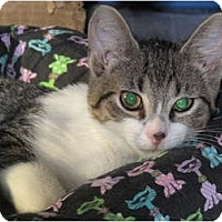 Adopt A Pet :: Alfie - Port Republic, MD