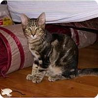 Adopt A Pet :: Mica - Portland, ME