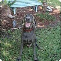 Adopt A Pet :: Keiser  **ADOPTED** - Eustis, FL