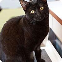 Adopt A Pet :: Crybaby - St. Louis, MO