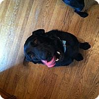Adopt A Pet :: Romeo - Oak Brook, IL