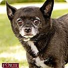 Adopt A Pet :: Leland