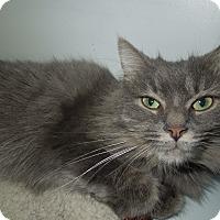 Adopt A Pet :: Muffin - Medina, OH