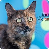 Adopt A Pet :: Katniss - Columbus, OH