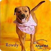 Adopt A Pet :: Rowdy - Topeka, KS