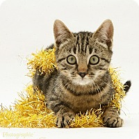Adopt A Pet :: Oyster - Arlington, VA