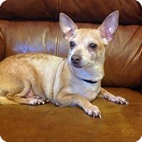 Adopt A Pet :: Sunshine - staten Island, NY
