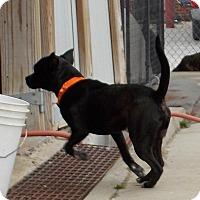 Adopt A Pet :: Peppy - Lewisburg, TN