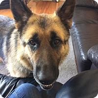 Adopt A Pet :: FINN - Winnipeg, MB