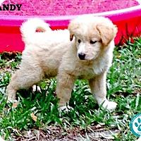 Adopt A Pet :: Randy - Kimberton, PA