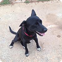 Adopt A Pet :: Meatball - Lawrenceville, GA
