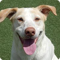 Adopt A Pet :: Gypsy - Lawrenceville, GA