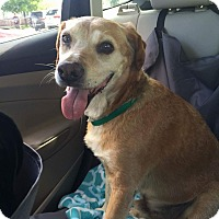 Adopt A Pet :: Toby _ courtesy list - Cleveland, OH