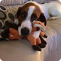 Adopt A Pet :: Wilson - Wylie, TX
