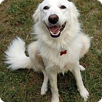 Adopt A Pet :: Lily  *Adopted - Tulsa, OK