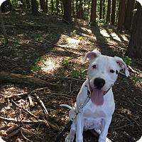 Adopt A Pet :: Max - Keswick, ON