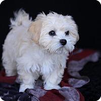 Adopt A Pet :: Pixie - SAN PEDRO, CA