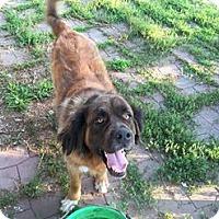 Adopt A Pet :: Jax - Des Moines, IA