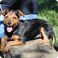 Adopt A Pet :: Coco - Parsons, KS