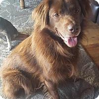 Adopt A Pet :: Hank - Great Bend, KS