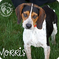 Beagle Mix Dog for adoption in Newport, Kentucky - Morris