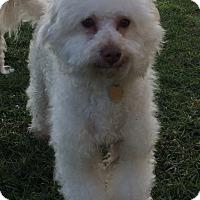 Adopt A Pet :: Wrapper - Los Angeles, CA